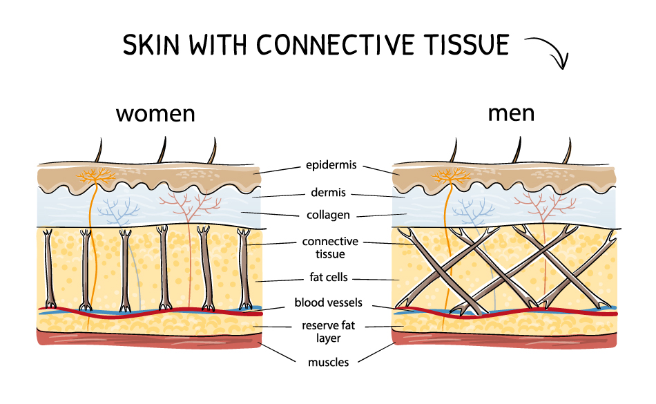 male-vs-female-skin