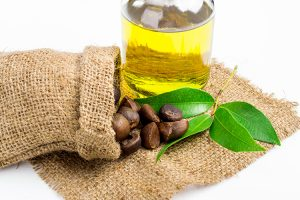 oleic acid from olive oil, seeds, and plant on burlap cloth